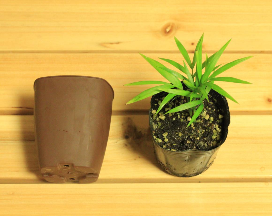 植木鉢をポットからはずす