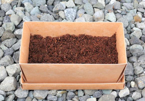 ブロッコリースプラウトの種まき